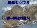 屏風岩・経ヶ岬でハヤブサウオッチング
